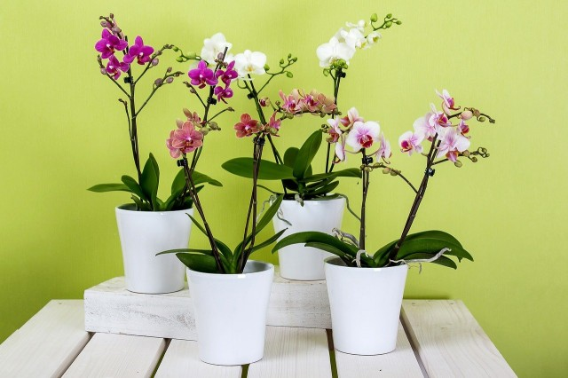 Transport roślin